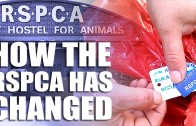 How the RSPCA has changed