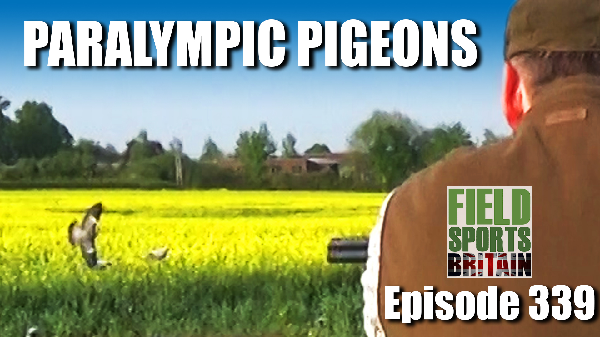 e339-paralympic-pigeons