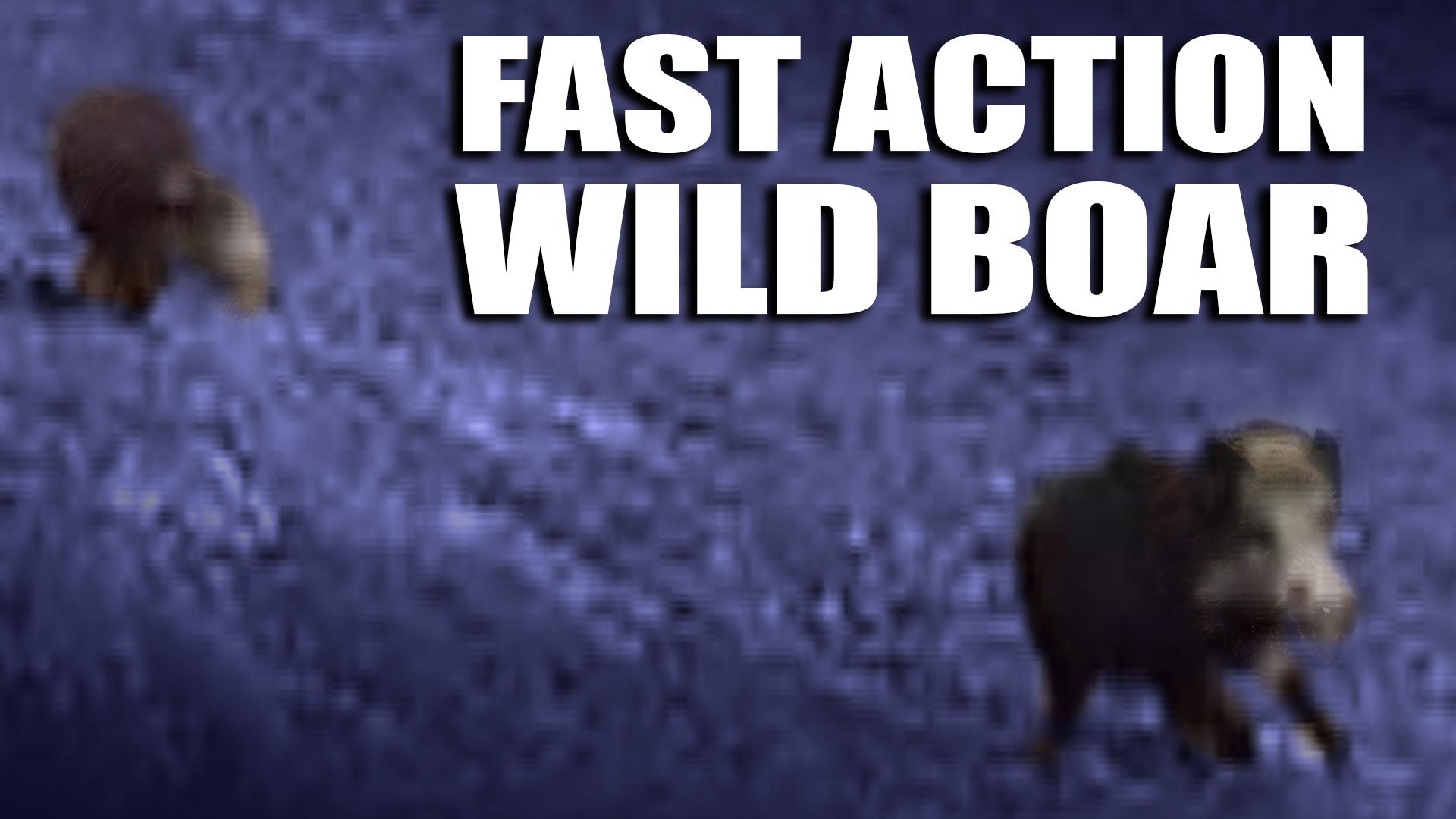 e368-fast-action-wild-boar
