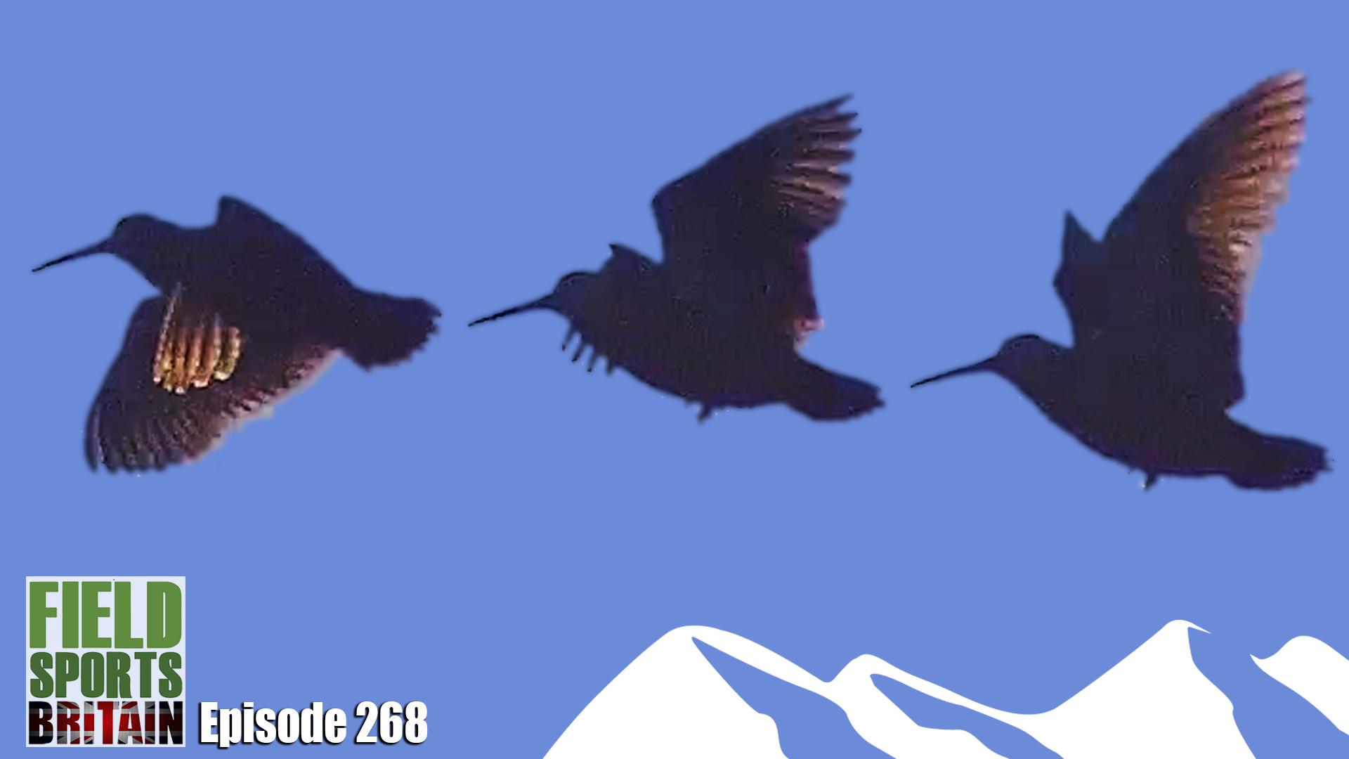 e368-preview-image