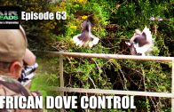 African Dove Control – AirHeads episode 63