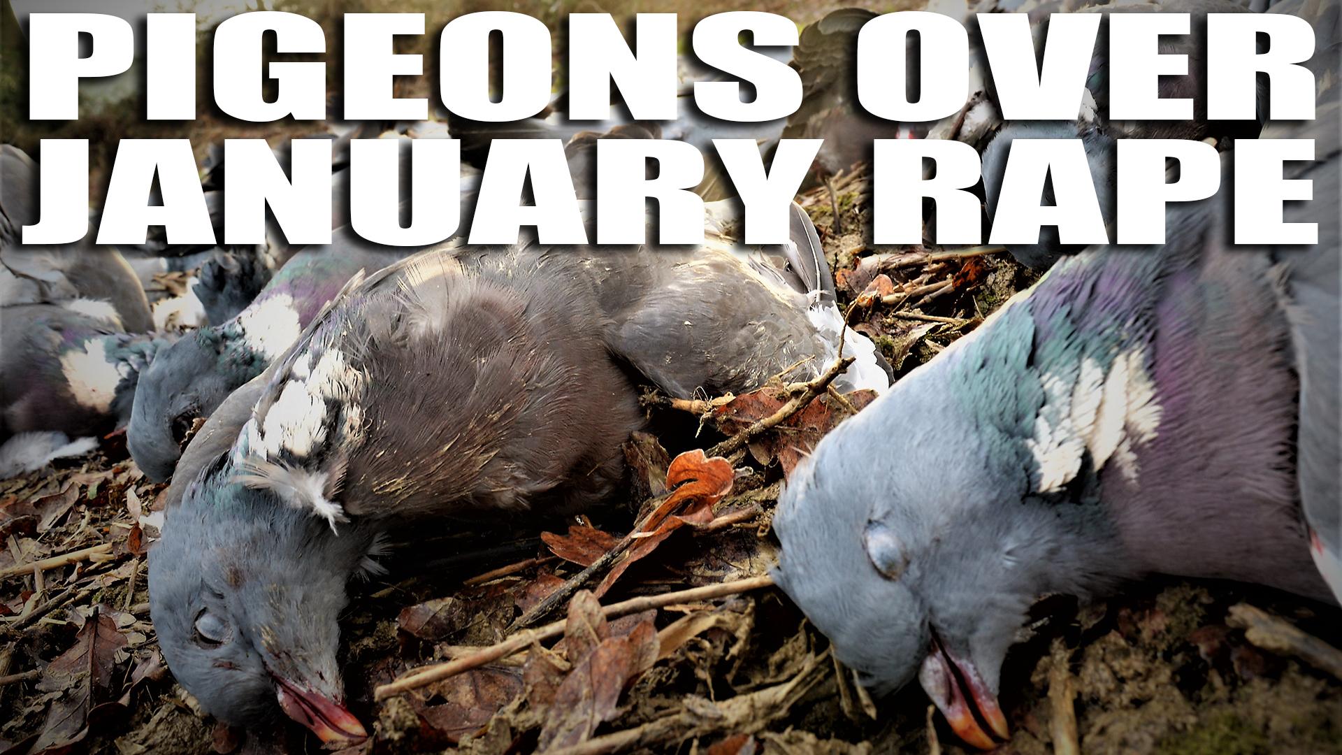 e372-crow-winser-pigeons