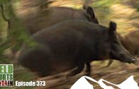 Fieldsports Britain – Hunting Boar with Hounds