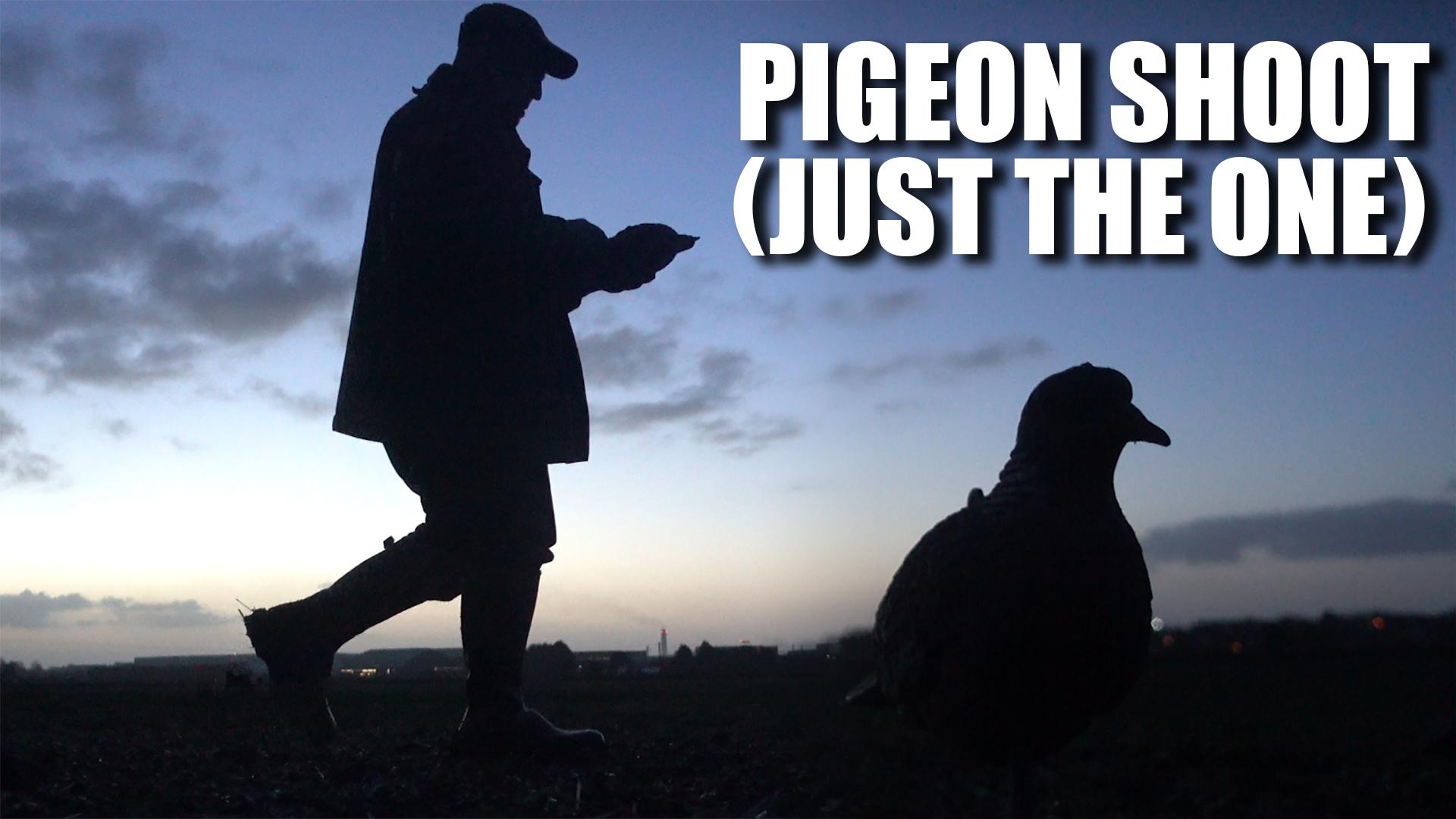 e377-pigeons