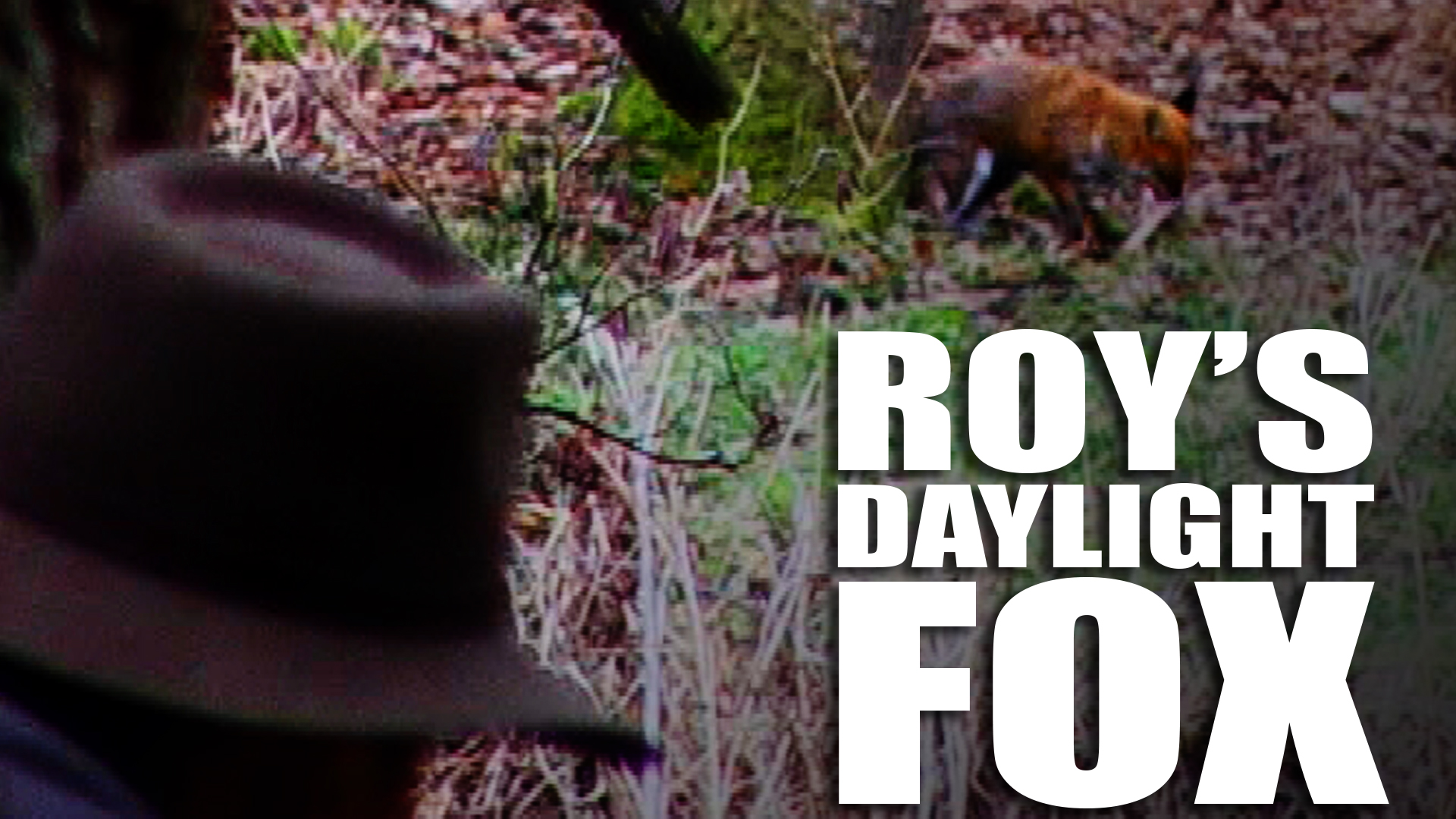 Foxshooting with Roy Lupton