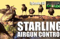 Starling Airgun Control – Airheads, episode 66
