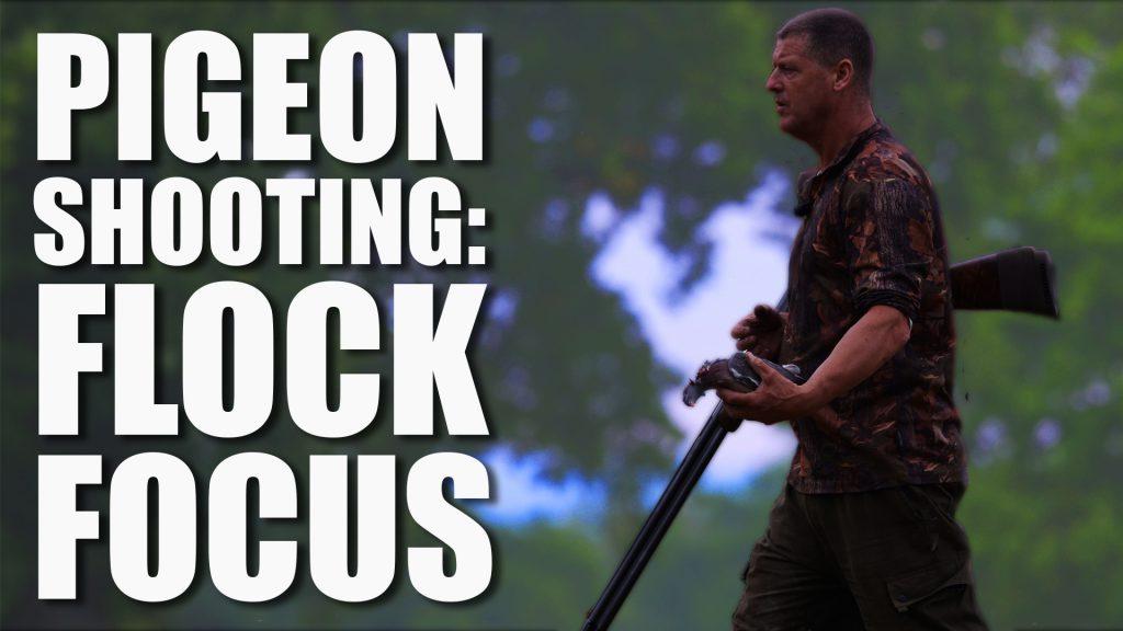 Pigeon Shooting: Flock Focus