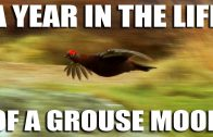 Grouse Season 2017
