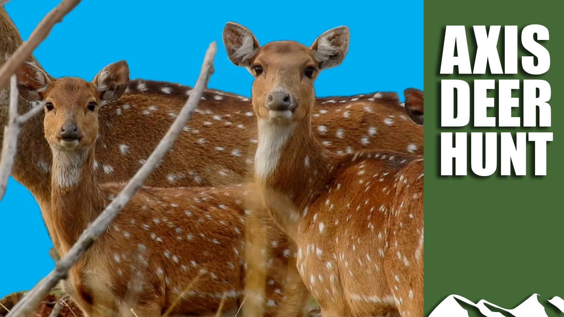 e408-axis-deer