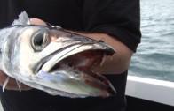 Fishing in Australia – barracuda and gummy sharks