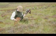 Fieldsports Britain – Grouse over pointers + high pheasants + giant carp funeral