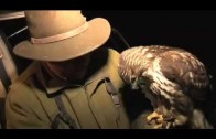 Fieldsports Britain – Lamping with hawks + Olympic shooting + cooking squirrels