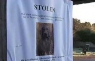 How to find lost or stolen dogs with DogLost