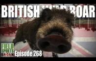 Fieldsports Britain – British Wild Boar