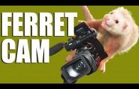 Fieldsports Britain – FerretCam – amazing rabbit-hunting footage (episode 176)