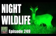 Fieldsports Britain – Hunting Night Wildlife