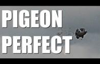 Fieldsports Britain : Pigeons, roebuck and airgunning tips  (episode 136)