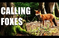 Fieldsports Britain : Shooting foxes, rabbits and how Italians run estates  (episode 148)