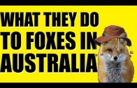 Fieldsports Britain – What they do to foxes in Australia (episode 194)