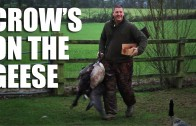 Crow's on the geese