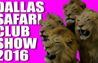 Dallas Safari Club Show 2016
