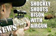 Shockey Shoots Buffalo with Air Crossbow Gun – HotAir news