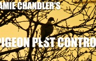 Jamie Chandler's Pigeon Pest Control