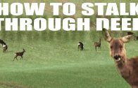 How to stalk through deer