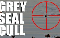 Grey Seal Cull