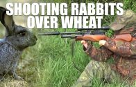 Shooting Rabbits over Wheat