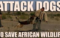 Attack dogs save Africa wildlife