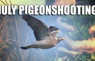 July Pigeon Patrol