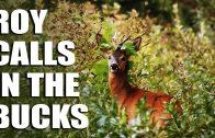 Roy Calls in the Bucks