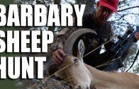 Barbary Sheep Hunt
