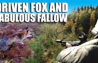 Driven Fox and Fabulous Fallow