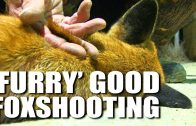 'Furry' Good Foxshooting