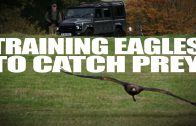 Training Eagles to Catch Prey
