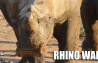 Rhino War: Fieldsports Africa special report