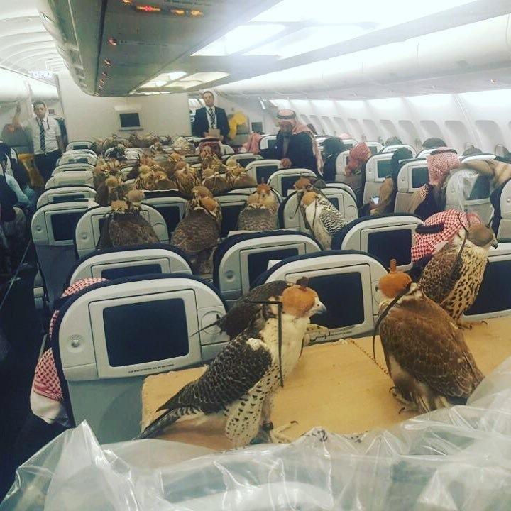 Birds of prey flying in style