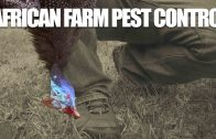 African-pest-control