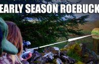 Early Season Roebuck