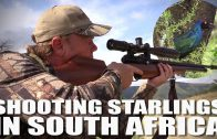 Shooting Starlings in South Africa