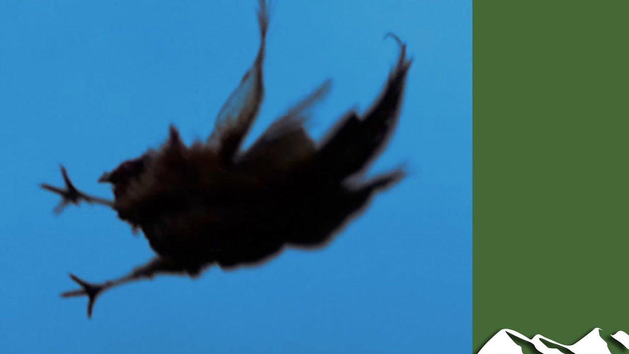 High Pheasants: Brigands Shoot