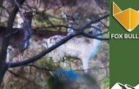 On Test: Fox ammo on deer