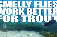 Smelly Flies Work Better for Trout