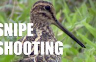 Snipe shooting on a wild wet Welsh bog