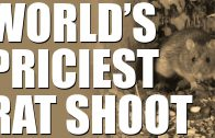 The most expensive rat shot in the world!