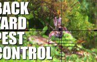 Airgun back yard pest control