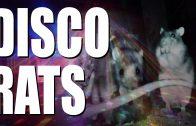 Disco Rats
