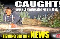 Fishing Britain NEWS – CAUGHT! Biggest Freshwater fish in Britain